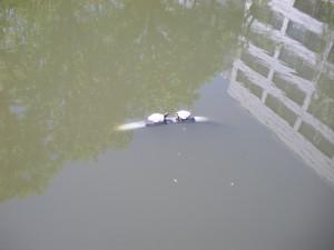 春の亀ヶ池