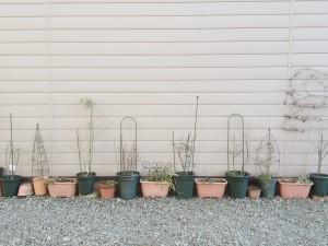 ゆるやかに、共に、生きるぼくたち~植木鉢と杜陵地区~